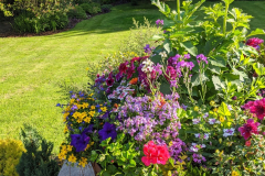 Bedding plants with depth of colour