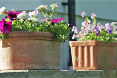 Sophisticated container planting