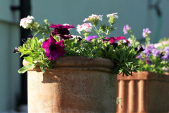 Simple summer containers