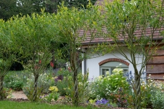 Lemon and blue border through platted trunk willow
