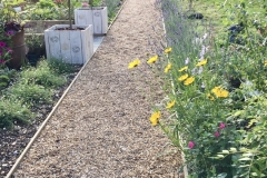 After - A gravel path providing access from the driveway to the kitchen, edged with dwarf lavender,. The herbaceous perrenials include: scabious, coreopsis, salvia and erigeron karbinskianus plants.