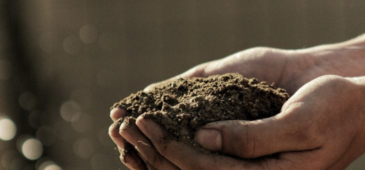 The Importance of Soil Testing Before Planting Your Garden